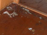 消臭・消毒・除菌が必要な床の写真
